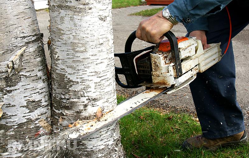 Надо спилить дерево куда обращаться